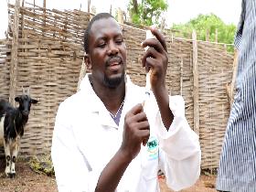 Campagne de vaccination du bétail Sénégal-Juin 2021
